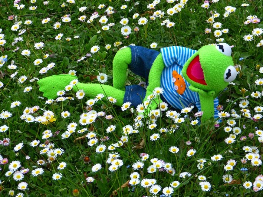 kermit-the-frog-happy